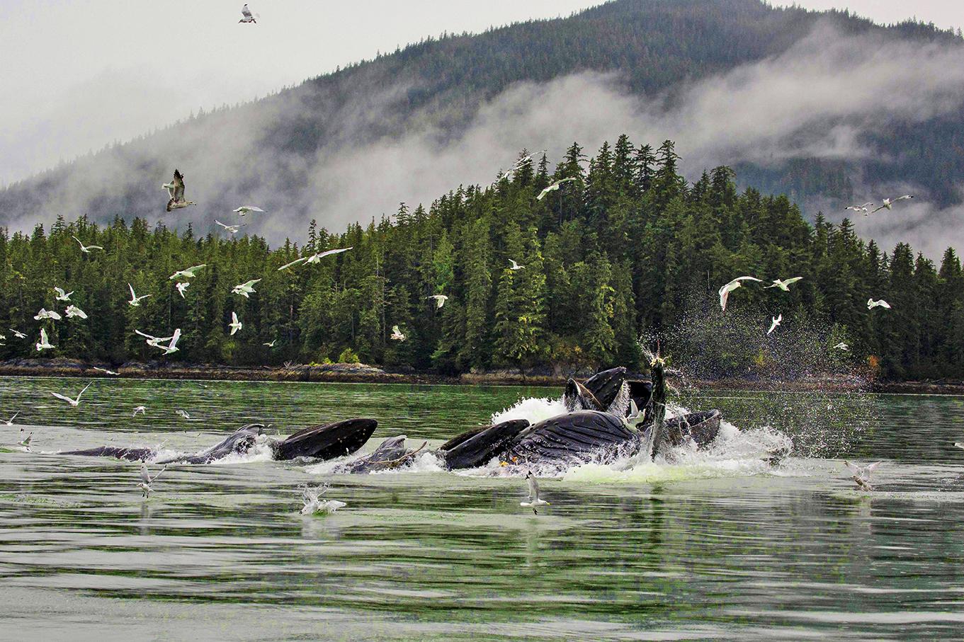 Alaska-1