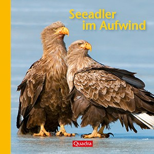 Seeadler im Aufwind